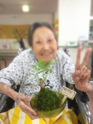 2015_苔玉_10.JPG