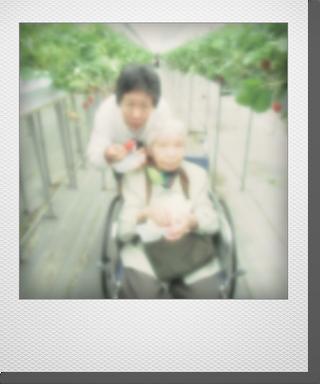 2015_苺狩り_06.png