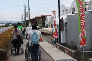 2016_デイいちご狩り_02.JPG